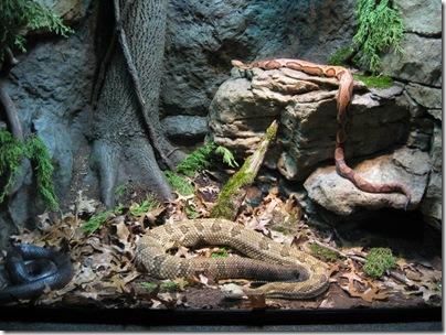 Reptileland Snakes