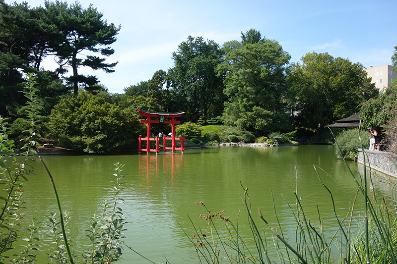 Brooklyn Botanic Garden Japanese Pond