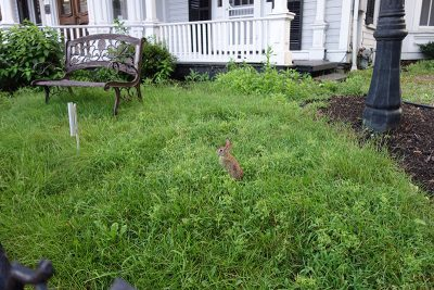 Mansion Inn Rabbit