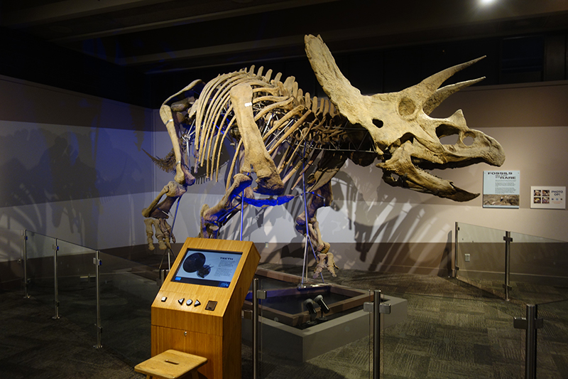 Triceratops Cliff